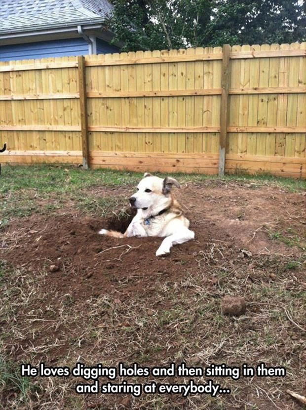 I don't always dig holes in the yard, but when I do, I sit in them and judge the world. Dog