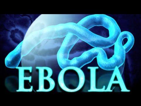 El Ebola  Como evoluciona en nuestro organismo