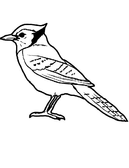 Simple Blue Jay Coloring Page Coloring Pages