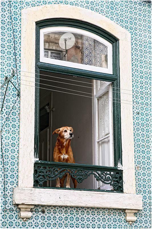 Lisboa. www.enjoyportugal.eu https://www.facebook.com/enjoyportugalcountry