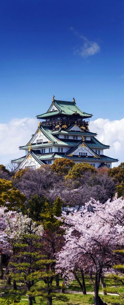 Osaka Castle with Sakura Blossom in Osaka, Japan -…