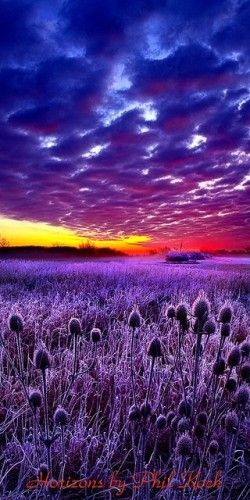 Purple sunset in Wisconsin - photo: Phil Koch on http://fineartamerica.com/featured/1-the-audience-phil-koch.html
