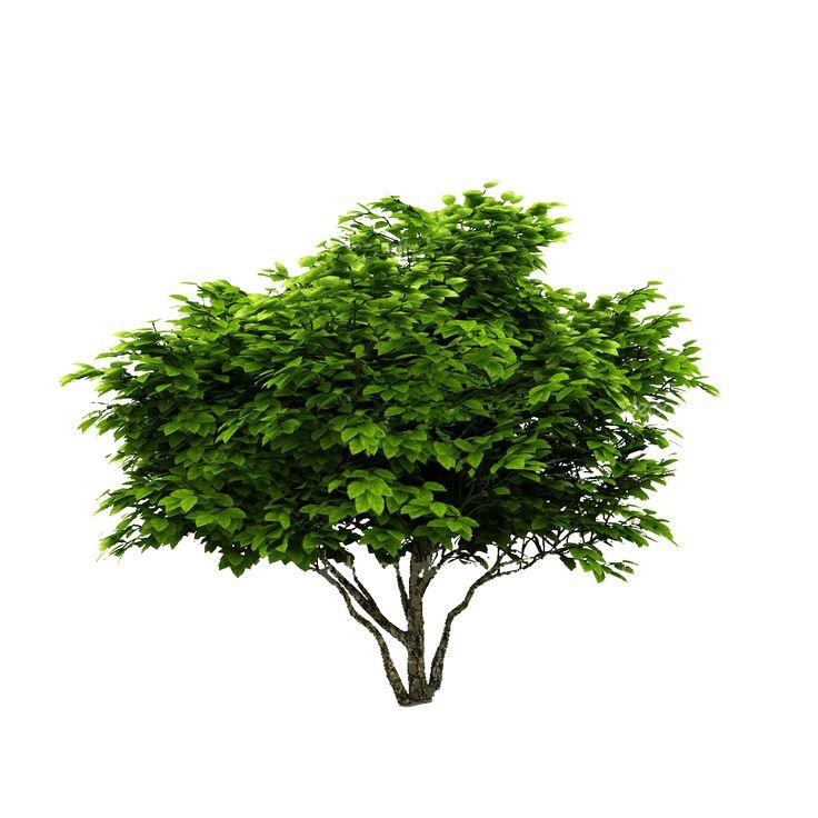 cutout plant shrub