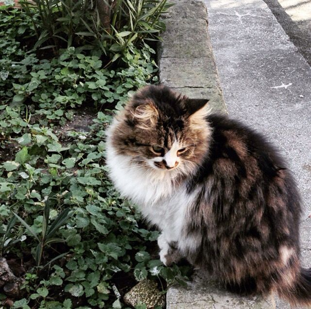 #cat #sweet