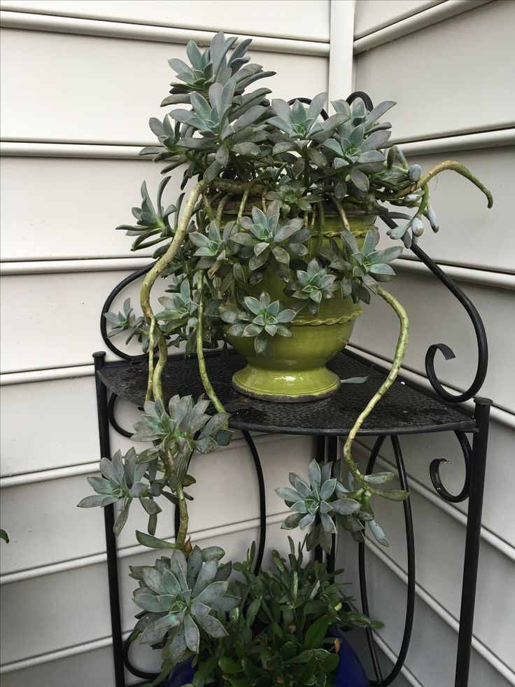 Pin on House Plants - MY Creations