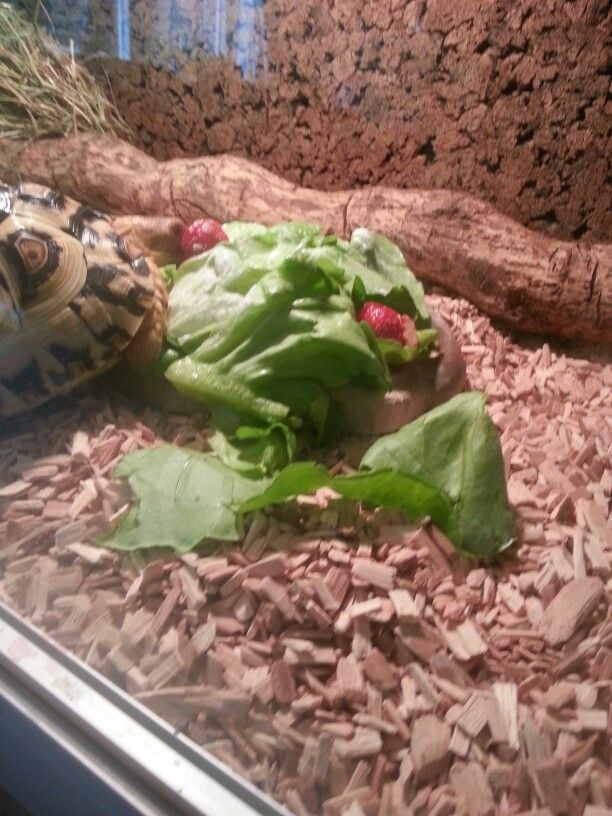 eating strawberries and lettuce
