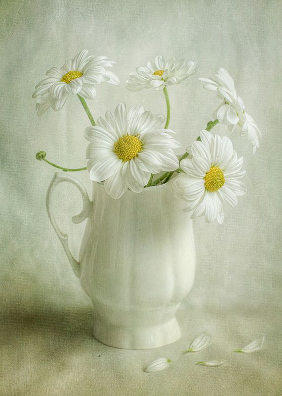White Daisies in a white jug x