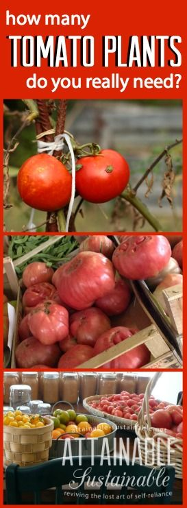 "Want to make sure your homestead garden produces enough tomatoes for your needs? I'm in the ""plant as many as you can"" camp (I'm a self-proclaimed tomato hoarder.) In reality, though, it depends on a number of factors. Here's how I broke it down for my household. #garden #vegetables"