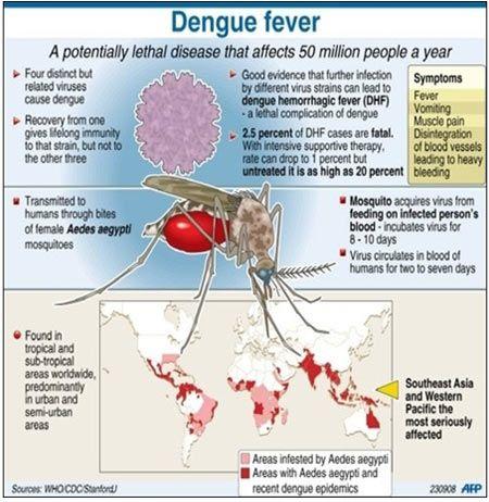 Esta imagen es un gran ejemplo de la manera convencional en la que realizan las infografías de diferentes enfermedades, no sólo del dengue. El uso del color y el texto son bastante sencillos. Punto focal bien marcado.