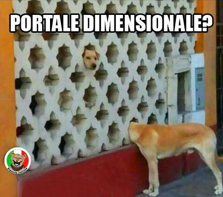 Ecco un cane che infila la testa in un buco e sembra voler provare un viaggio verso un'altra dimensione. Vignetta e Vignette divertenti in italiano e italiane.