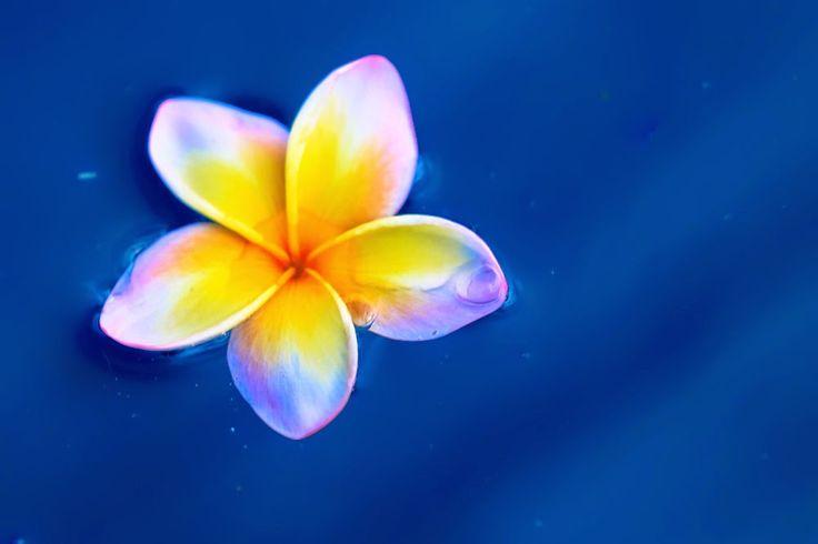 Koro Fiji