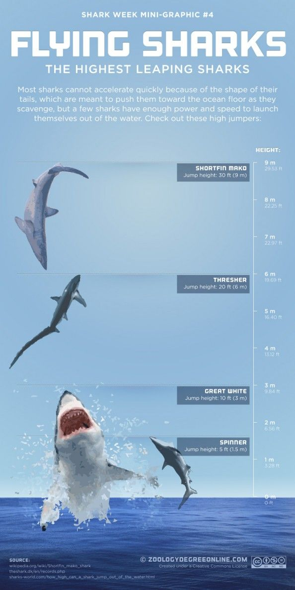 Most sharks cannot accelerate quickly because of the shape of their tails, which are meant to push them toward the ocean floor as they scavenge, but a few sharks have enough power and speed to launch themselves out of the water.