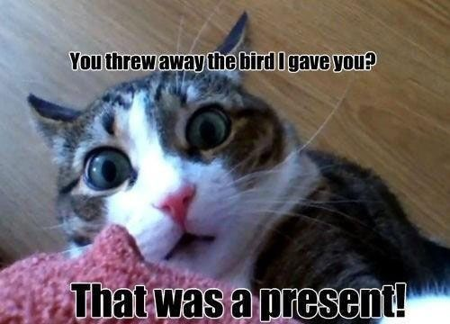 He Was Just Being Nice: Mice, Funny Animal Pictures, Funny Pictures, Funny Cat, Gifts, Even, Funniest Pictures, Kitty, Birds