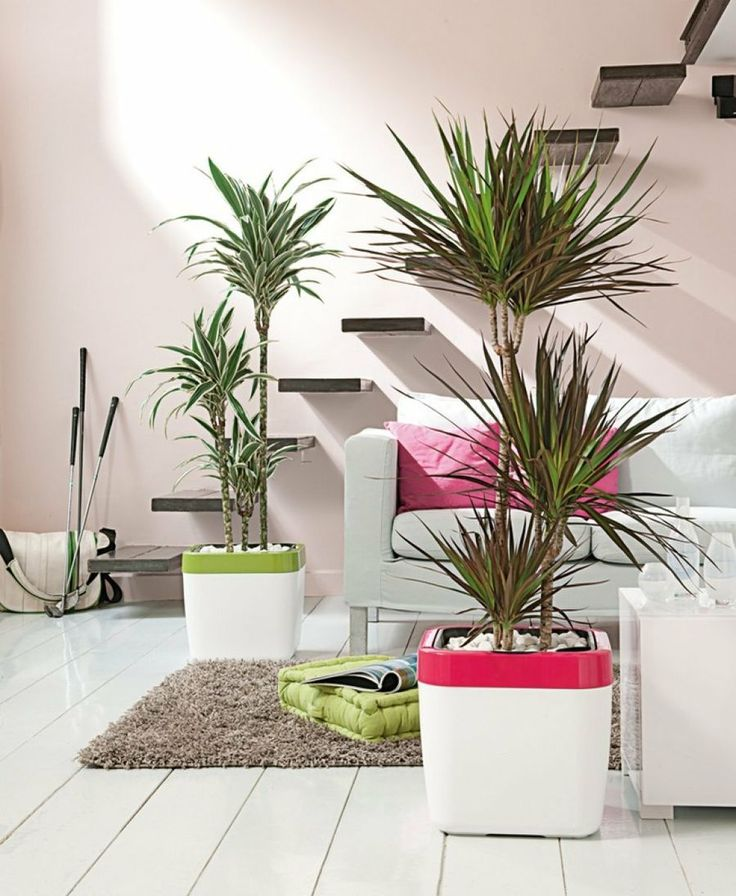 Ideas para decorar tu hogar de forma especial con plantas for Ideas para decorar interiores con plantas