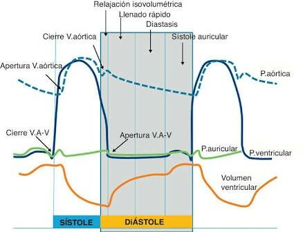Se define como ciclo cardiaco a la secuencia de eventos eléctricos, mecánicos y sonoros que ocurren durante un latido cardíaco completo. Que incluyen la despolarización y repolarización del miocardio, la contracción (sístole) y la relajación (diástole) de las diferentes cavidades cardíacas, el cierre y apertura de válvulas. Todo este proceso generalmente ocurre en menos de un segundo.