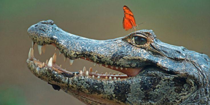 2017-03-20 - crocodile image free for desktop, #1844093