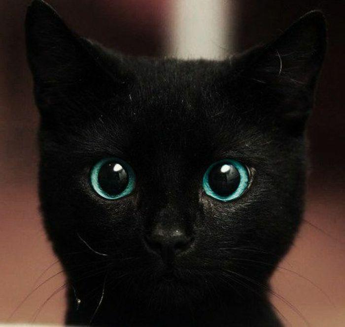 Baby Eye Color Black Kitten With Unusual Green Blue Turquoise Eyes Looking Surprised Blackcat Susse Tiere Tiere Kleine Tiere