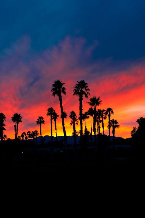 palm trees sunset tumblr - photo #38