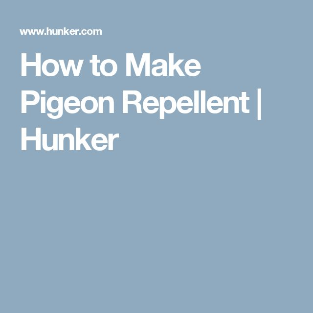How to Make Pigeon Repellent | Hunker