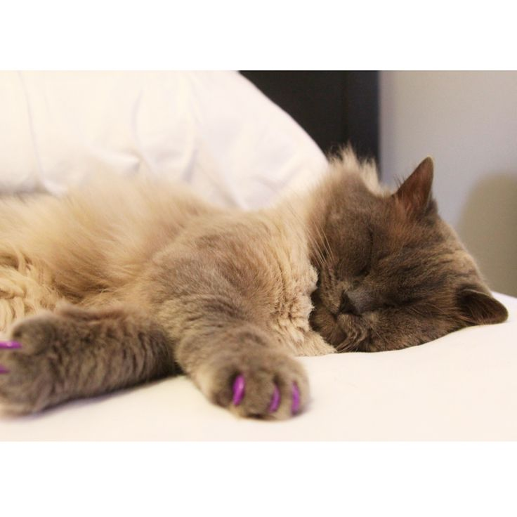 1000 images about alternatives to declawing on pinterest