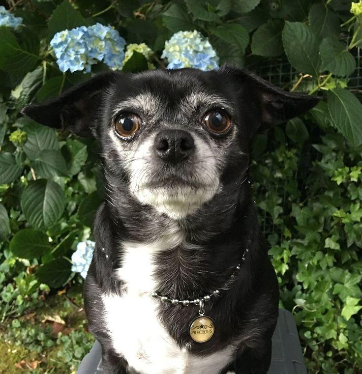 """""""Precious"""" Dog necklace   www.furrytales.no"""