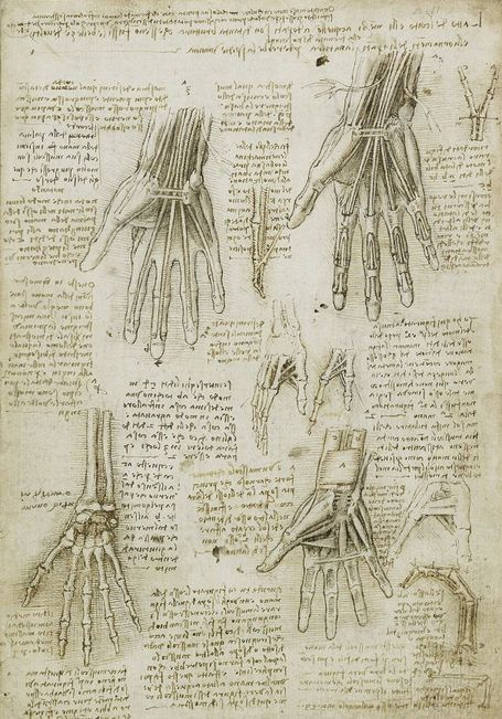 Long praised as one of the finest artists of the Renaissance era and a visionary inventor, da Vinci's work as an anatomist was also well ahead of its time