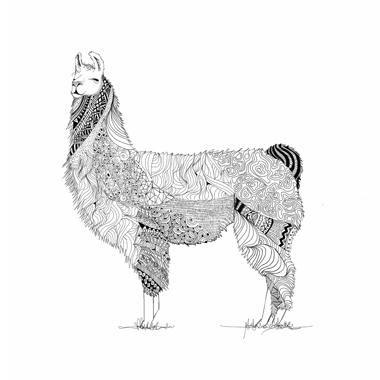 Lama af Mads Hindhede
