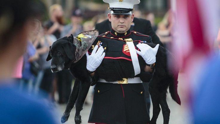 Hundreds Give Tearful Farewell to Hero War Dog