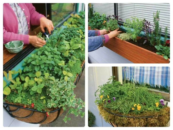 7 best INDOOR HERB GARDEN images on Pinterest Herbs garden