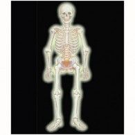 Cutout Jointed Skeleton Glow in the Dark $10.95 A19567