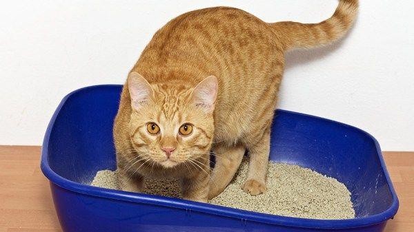 Se você tem gato, polvilhe-o na caixa de areia para absorver o cheiro ruim.