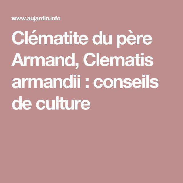 Clématite du père Armand, Clematis armandii : conseils de culture