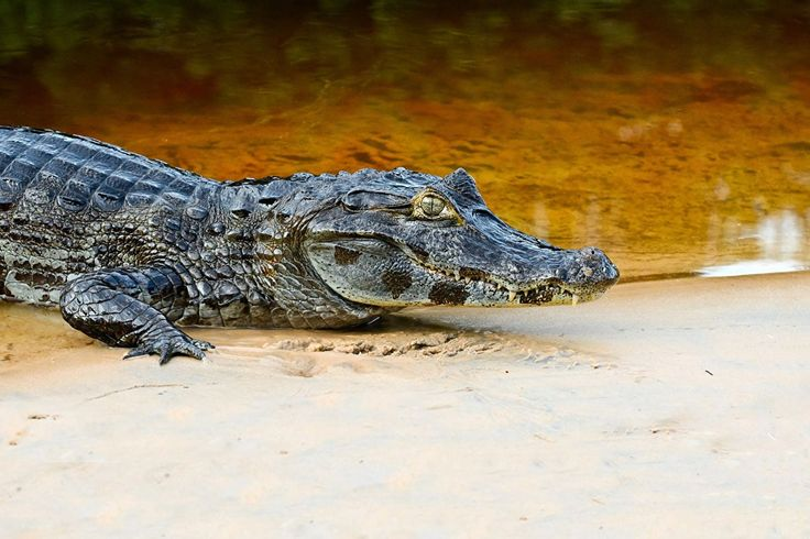49 best Crocodile images