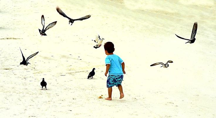 The boy and doves by valcir.siqueira.7