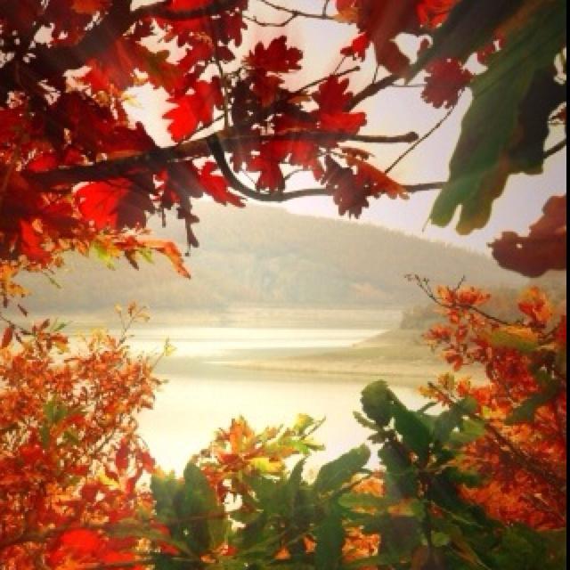 Pretty: Fall Beautiful, Summer Picnic, Autumn Leaves, Favorite Seasons, Autumn Beautiful, Fall Trees, Autumn Color, Autumn Splendor, Fall Color