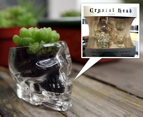 25 best images about crystal skull vodka projects on for Cut top off bottle