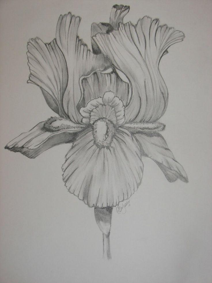 Bearded+Iris+Flower+Tattoo+Drawing   bearded iris 1 bearded iris 2