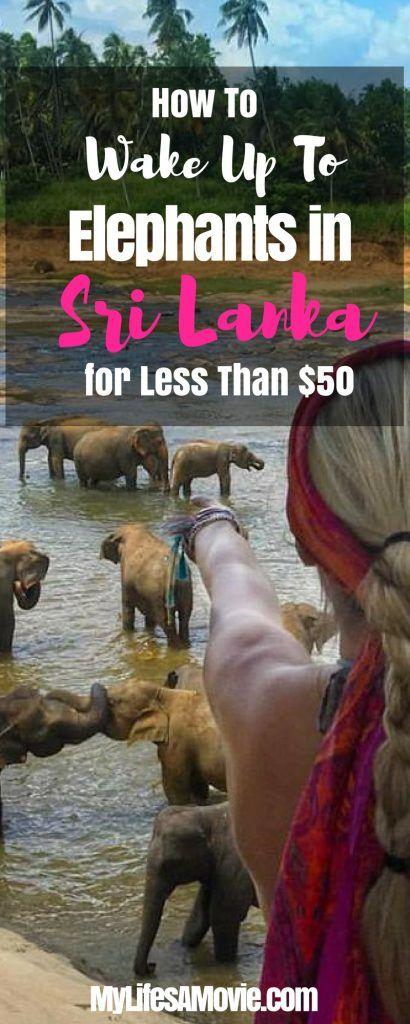 How to Wake Up to Elephants in Sri Lanka - MyLifesAMovie.com(1)