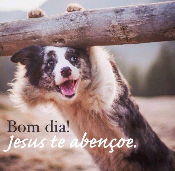 Pin Em Bom Dia Morning Dog Cia Cachorros