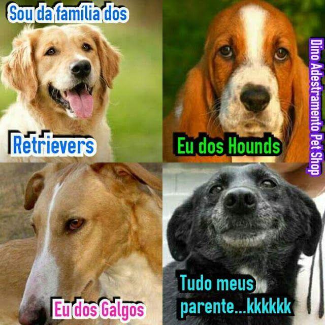 Fica Cãomigo: Quer um cão de raça?