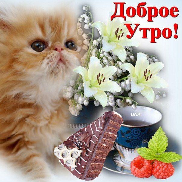 Энергетикам смешные, фото с кошками и надписями доброе утро