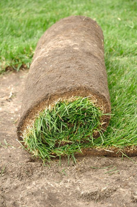 Installing a New Tucson Sod Lawn? How to Do it Right: http://evergreenturf.com/Installing-a-New-Tucson-Sod-Lawn-How-to-Do-it-Right-Sod-Installation.php  Tucson Sod Roll #EvergreenTurf #TucsonSod