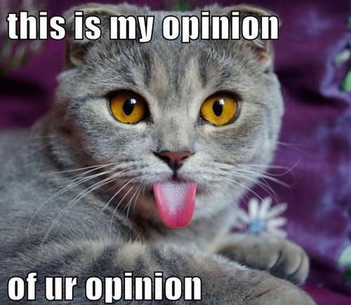 This goes to obnoxious fans brats, who leave rude comments on my pins.
