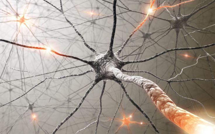 La sérotonine est un neurotransmetteur, c'est-à-dire une substance qui permet de transmettre l'influx nerveux entre les neurones. Le nom complet de la molécule est cinq hydroxytryptamine (5-HT). Elle est dérivée d'un acide aminé, le...