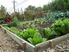 Gardening know how...from the beginning of growing a Vegetable GardenGardens Ideas, Green Thumb, Raised Beds, Food Deserts, Vegetables Gardens, Small Spaces, Gardens Design, Veggies Gardens, Vegetable Gardening