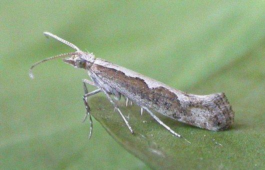 """Así lo señala un estudio publicado en """"Nature Communications"""", que además indica que los insectos invasores causan en el mundo daños por cerca de 70.000 millones de euros. Los insectos en general provocan un alto coste en la agricultura al consu"""