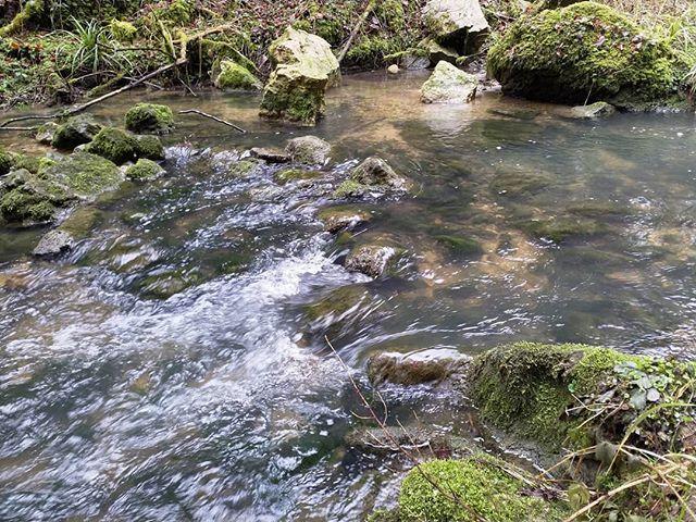 #Naturmomente #Schwarzbubenland #Solothurn #Nunningen #Schweiz  #photooftheday #magicplaces #kraftorte #switzerland #switzerlandpictures #magicswitzerland  #nature #naturelovers #forest #winter
