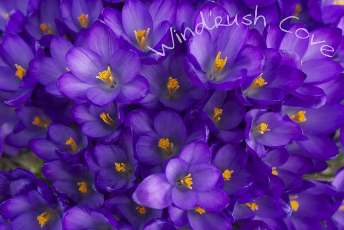 Purple Tapestry - Fine Art Nature Print - Photography - 8x10 by Windrush Cove, $30.00 USD