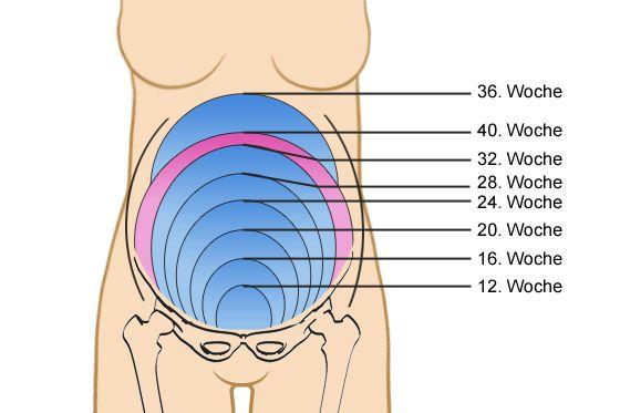 Schwangerschaft Gebärmutter