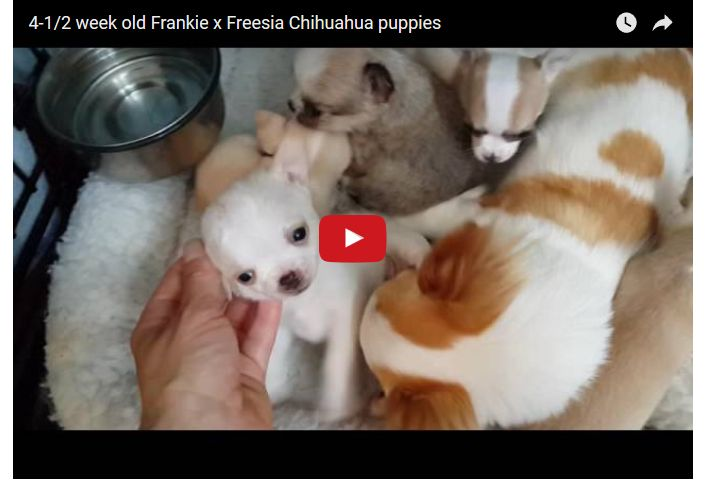 Freesia and Her Puppies